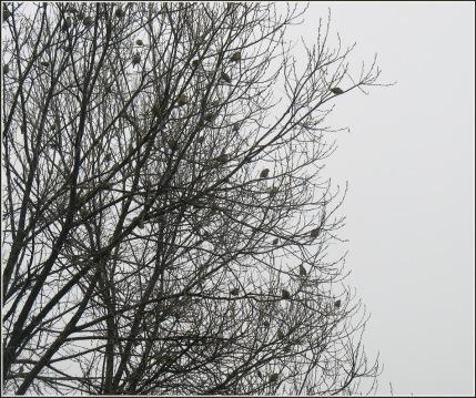 aprila-migla-un-cits-087