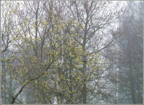 aprila-migla-un-cits-108