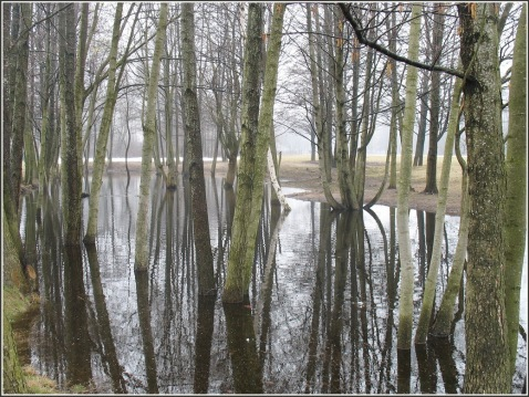 aprila-migla-un-cits-139
