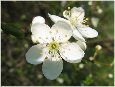 pavasaris30-019