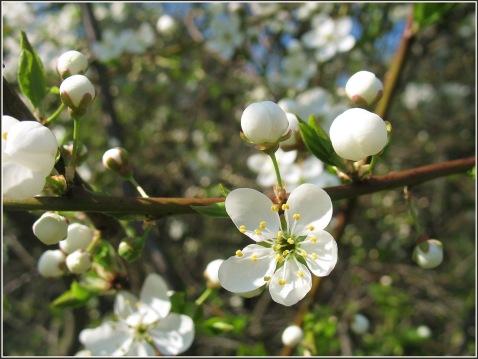 pavasaris30-022